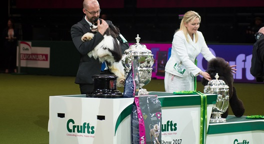 Image for CRUFTS 2019 & BEST IN SHOW